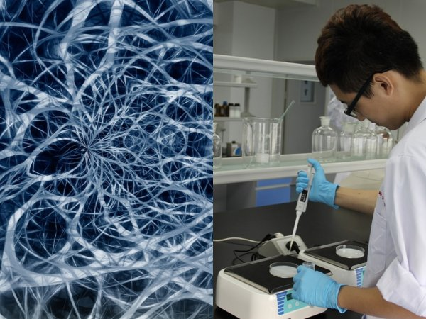 Учёные смогли восстановить нервные клетки после рассеянного склероза