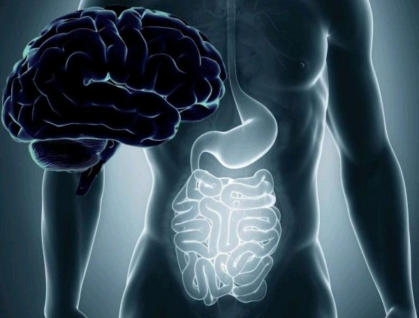 Ученые изучили связь мозга с желудком и кишечником