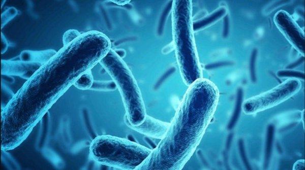 Самый распространенный организм на Земле способен выращивать внутри себя вирусы