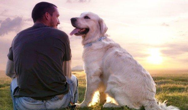 Ученые объяснили, при каком условии собака спасет своего хозяина