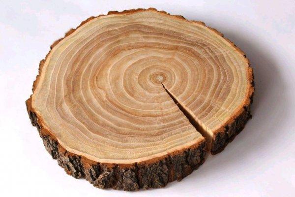 О причинах побед Чингисхана рассказали кольца на деревьях