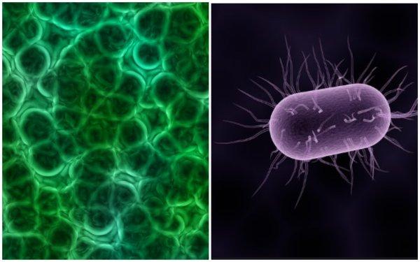 Израильские ученые обнаружили бактерии в раковых клетках