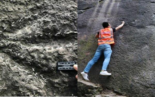 Китайские скалолазы обнаружили следы трёхпалого динозавра
