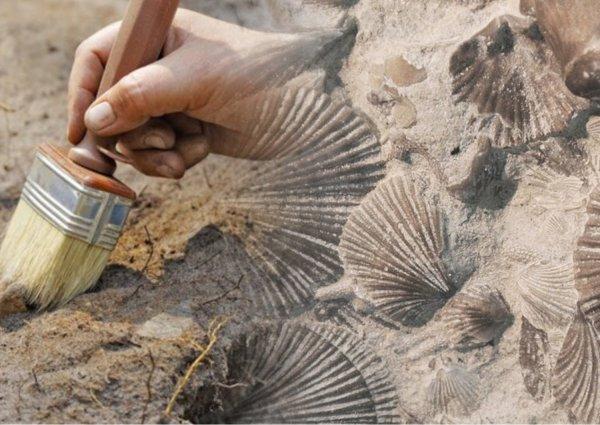 Учёные нашли в Китае паразитов возрастом в полмиллиарда лет