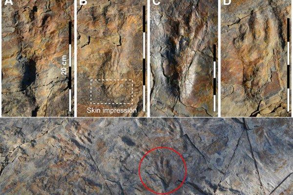 В Южной Корее ученые нашли следы прямоходящего крокодила