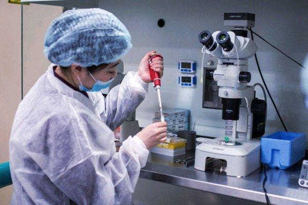 Упрощенный эмбрион человека впервые вырастили из стволовых клеток