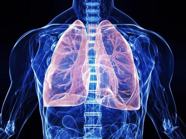 Помогающий бороться с вирусами белок блокирует восстановление легких