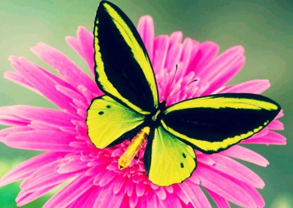 Воск на крыльях спасает бабочек и птиц во время ливней