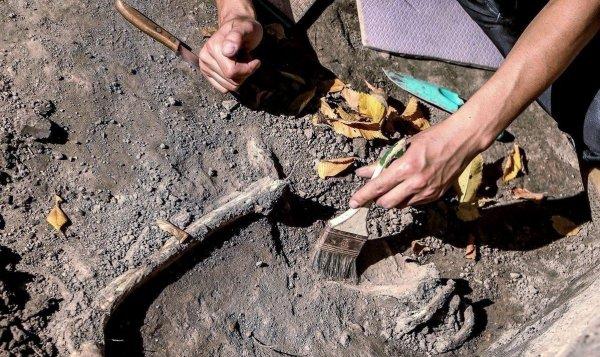 Археологи старейшие в Чили останки древнего млекопитающего
