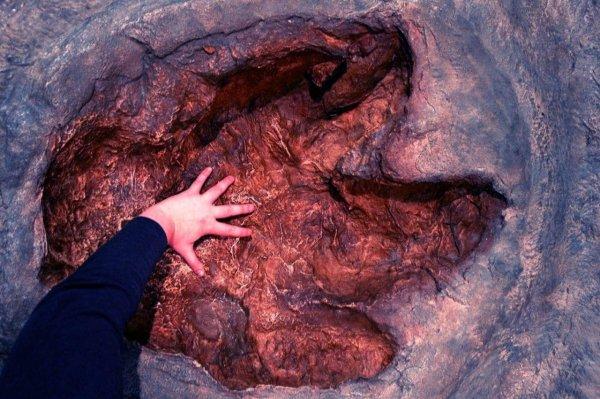В Австралии найдены следы неизвестного хищного динозавра