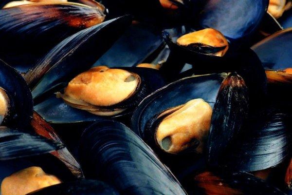 Морская диета из моллюсков помогла выжить древним мигрантам