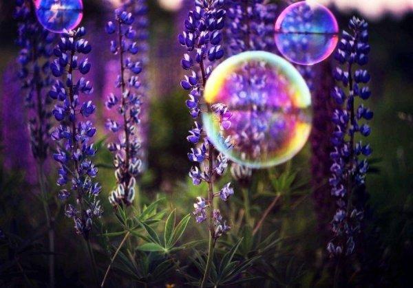 Цветы вместо пчел могут опылять мыльные пузыри