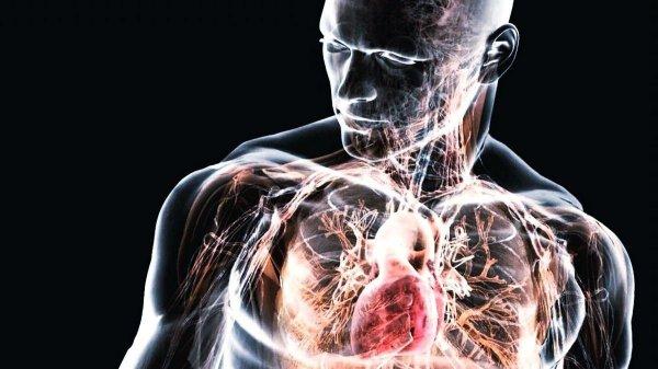 Технология 3D-печати сможет напечатать органы внутри человеческого тела
